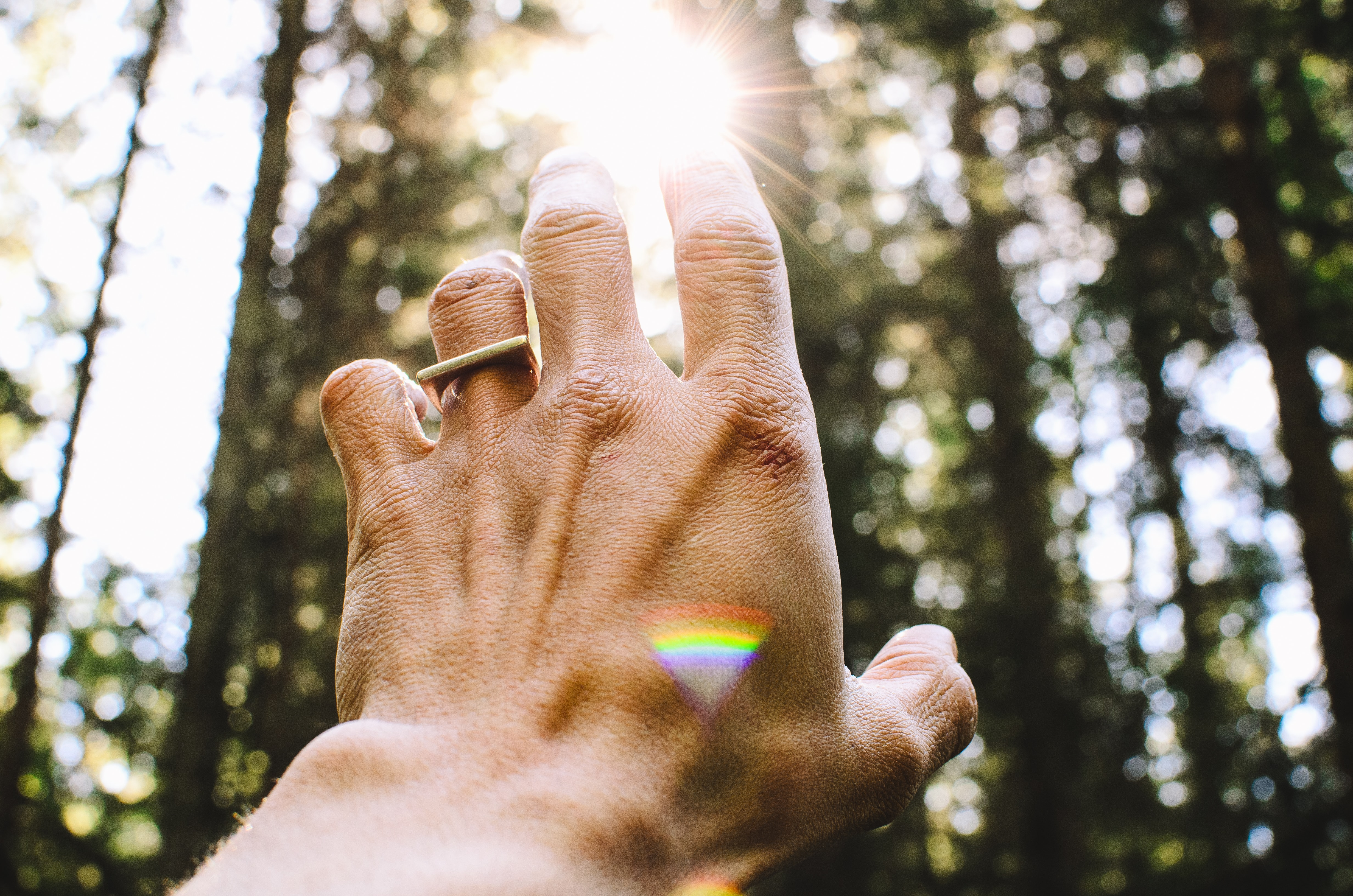 A hand with rings on it reaching out towards the trees