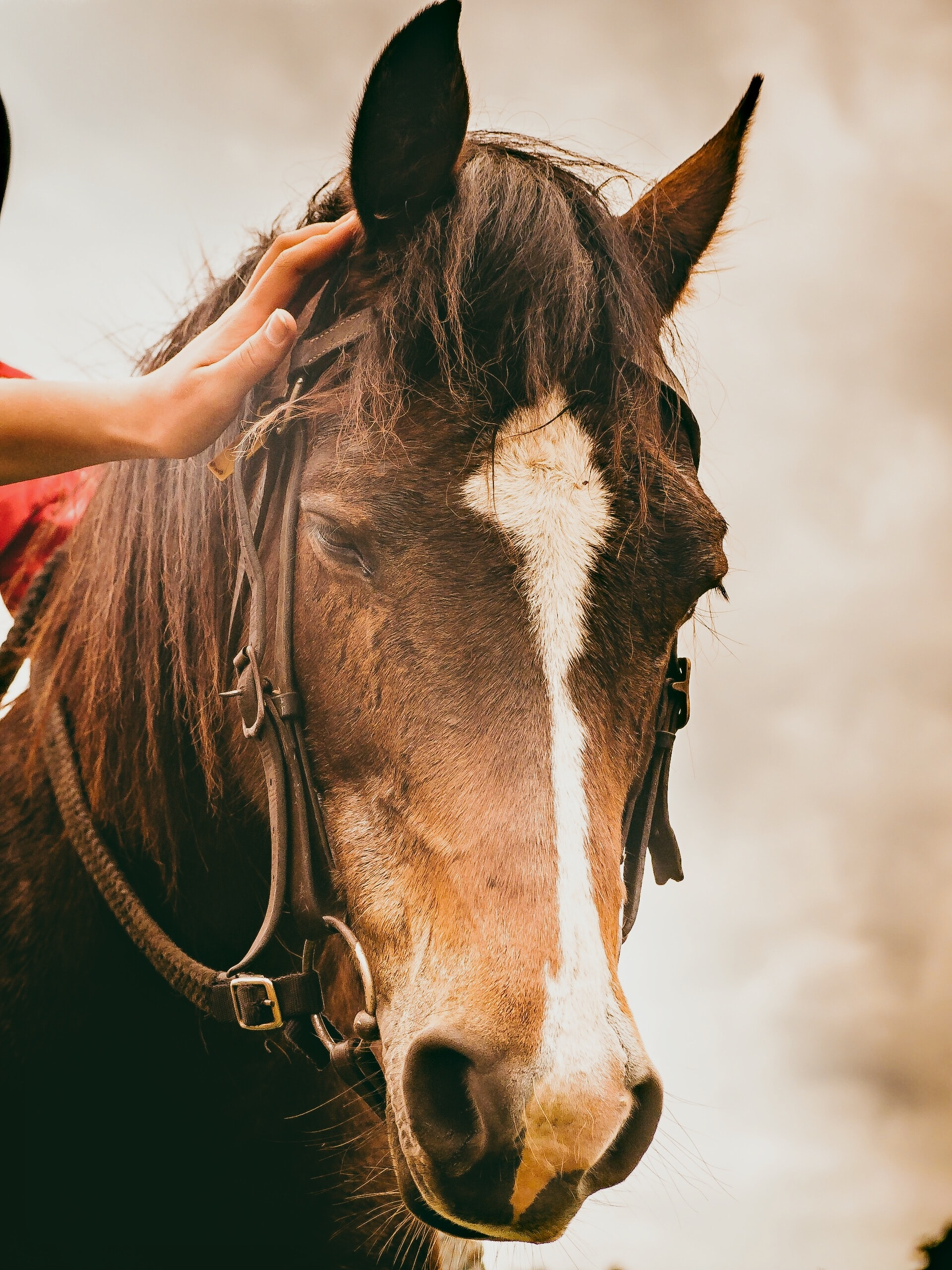 A woman's hand affectionately rests on the mane of a dark brown horse