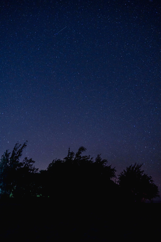 trees under blue starry night