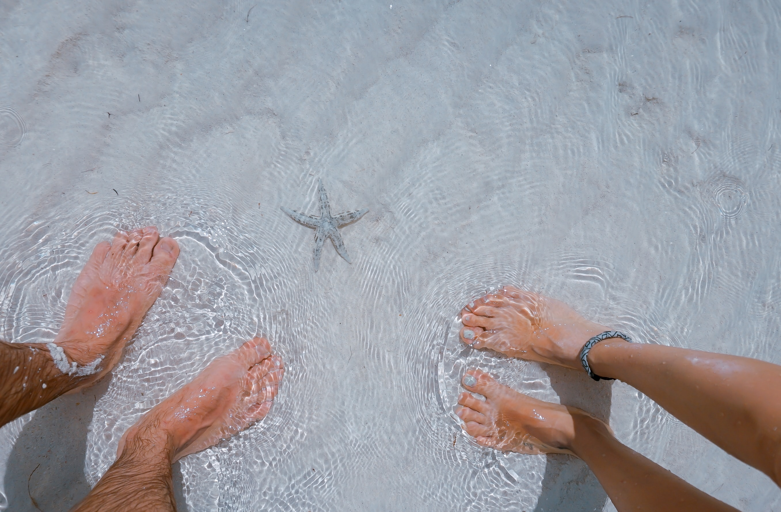 Two people's feet in the sea, next to a starfish