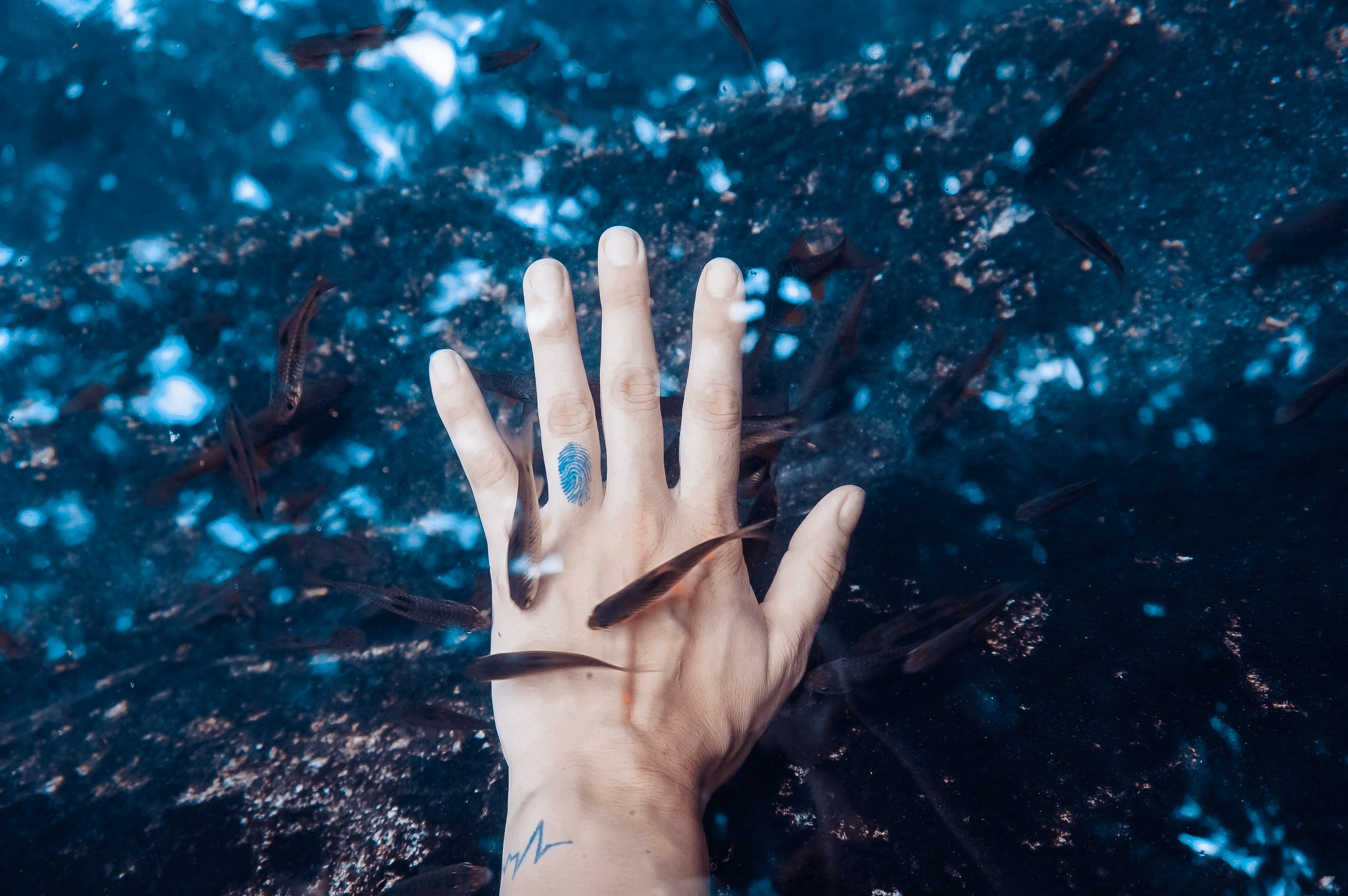 left human hand surrounded black pet fish