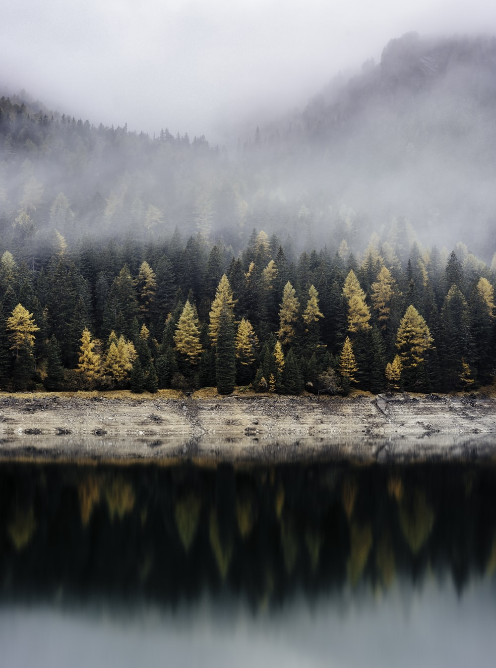 trees reflecting on body of water