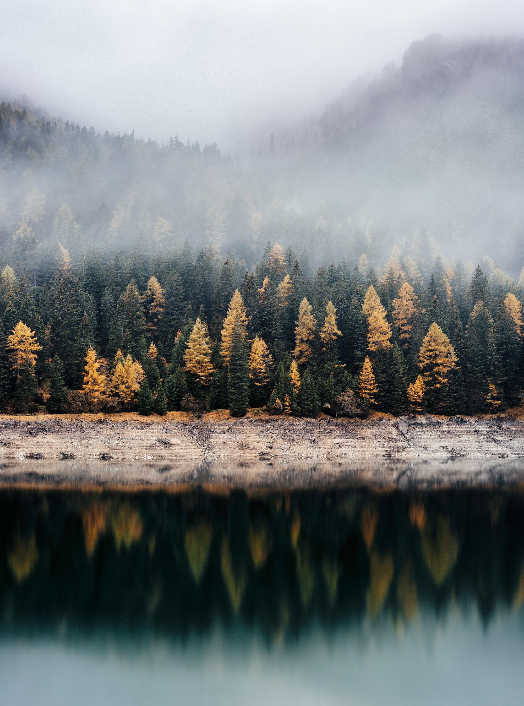Осенний лес за озером. Отражение в воде создает симметрию