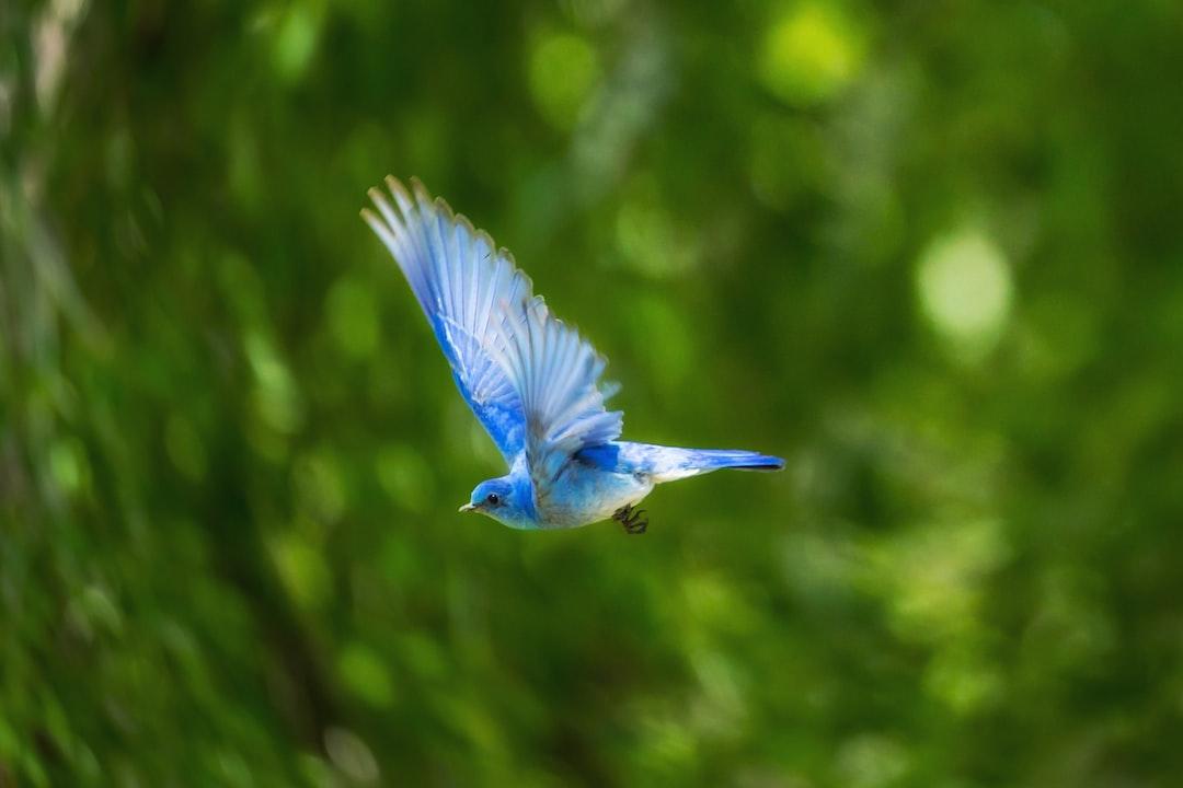 Naczelne wśród ptaków