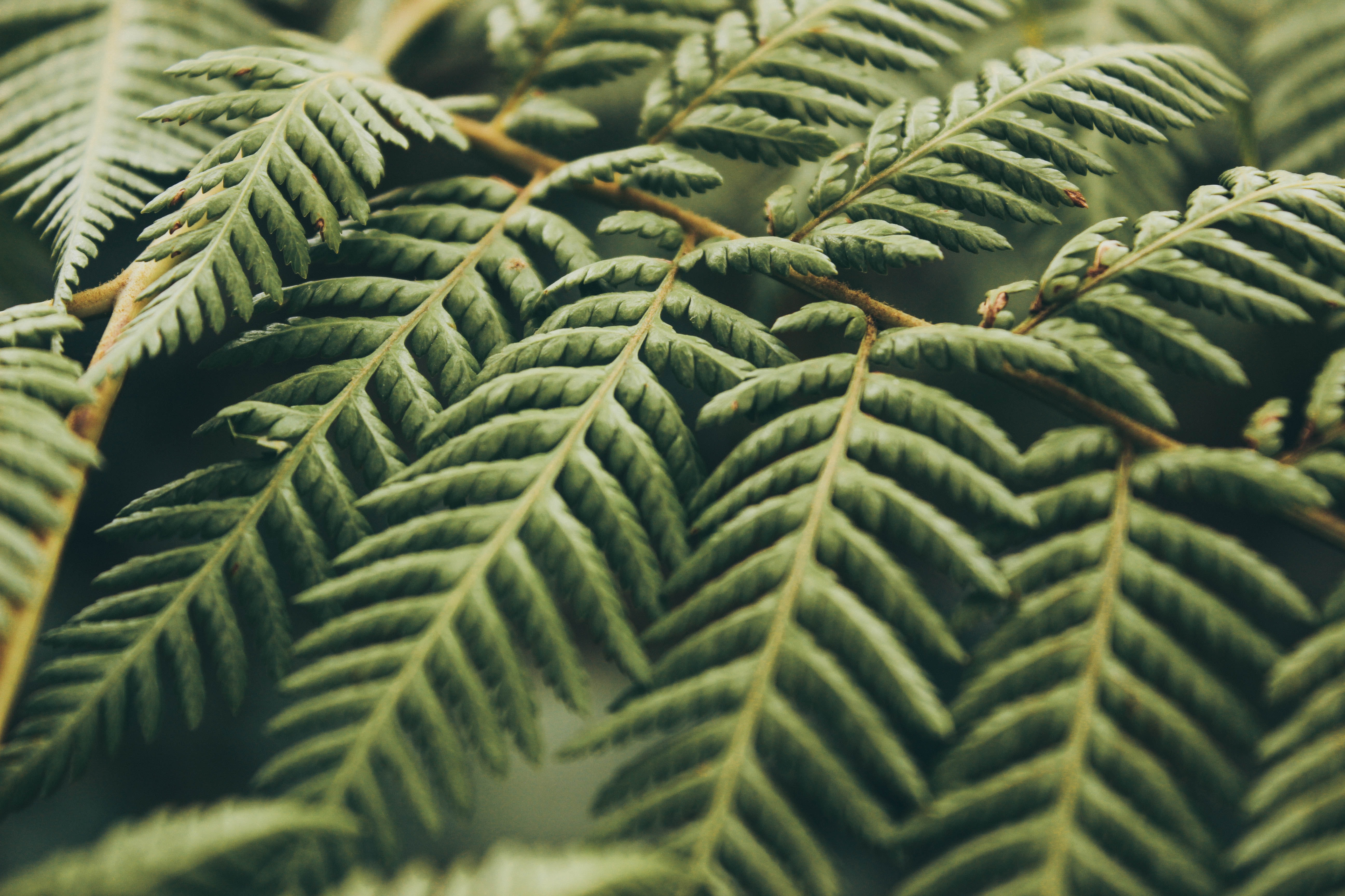 closeup photo of green leafed tree