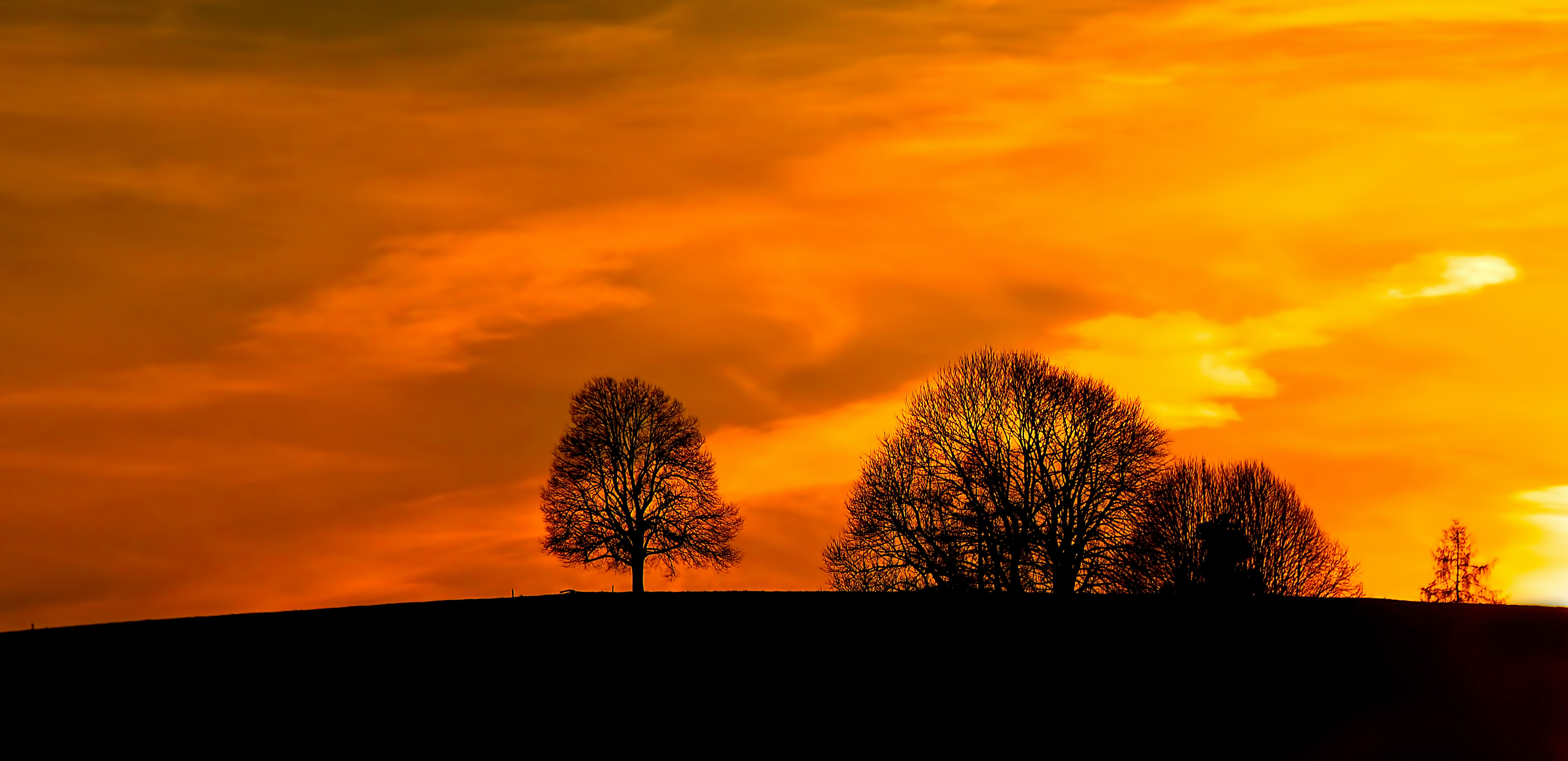 Trees on a hill are set in silhouette against a deep orange and yellow sunset.