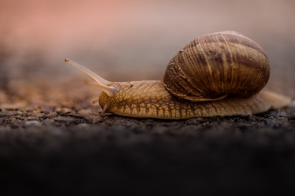 shallow focus photo of brown snail