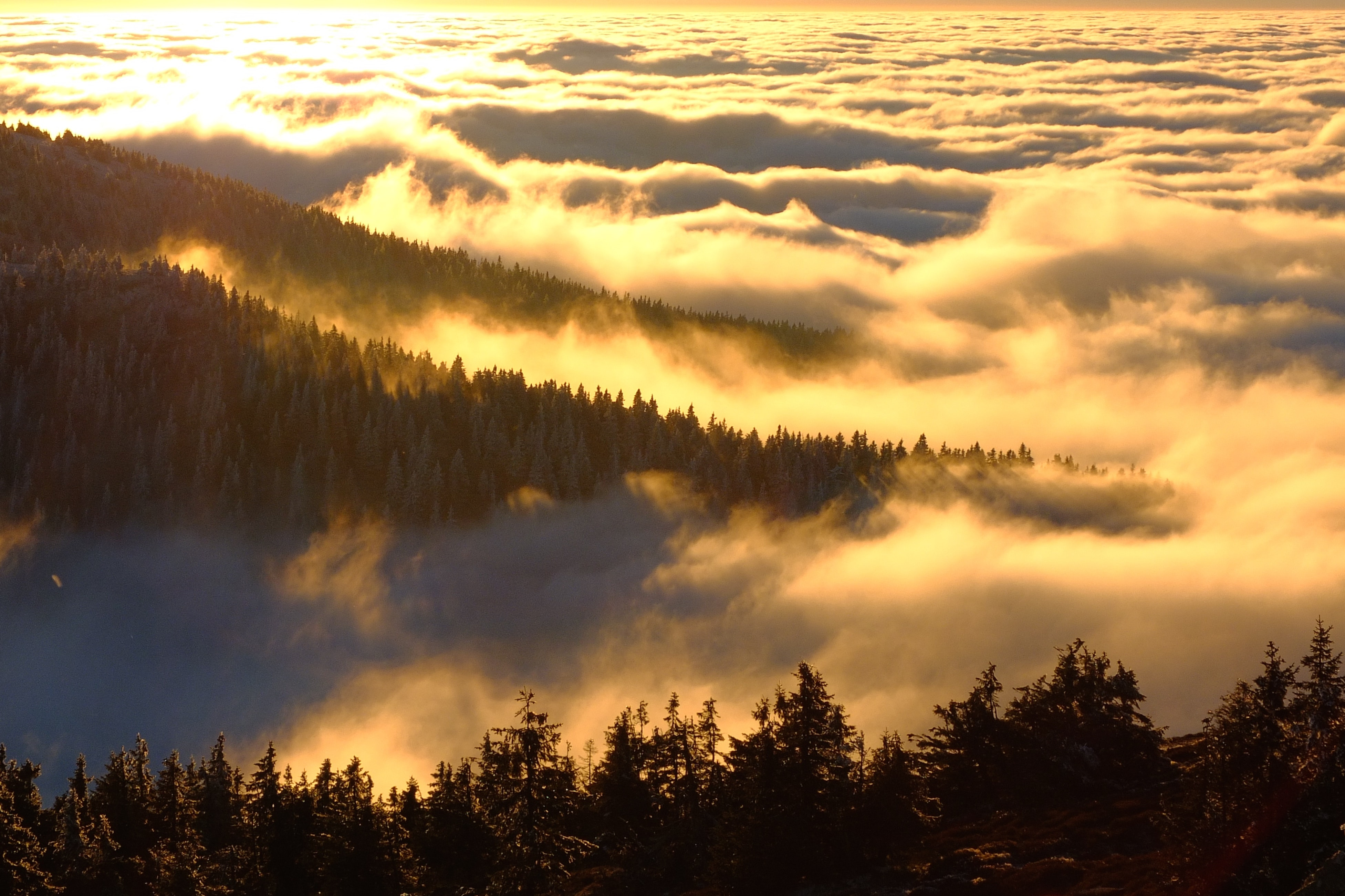 Forested hills rising up above a sea of clouds