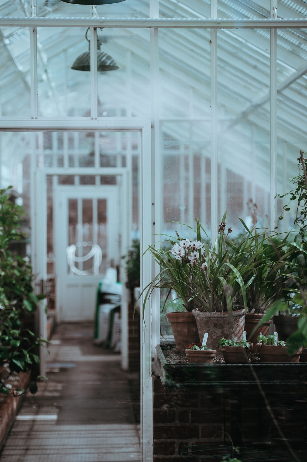 green plants inside the greenhouse
