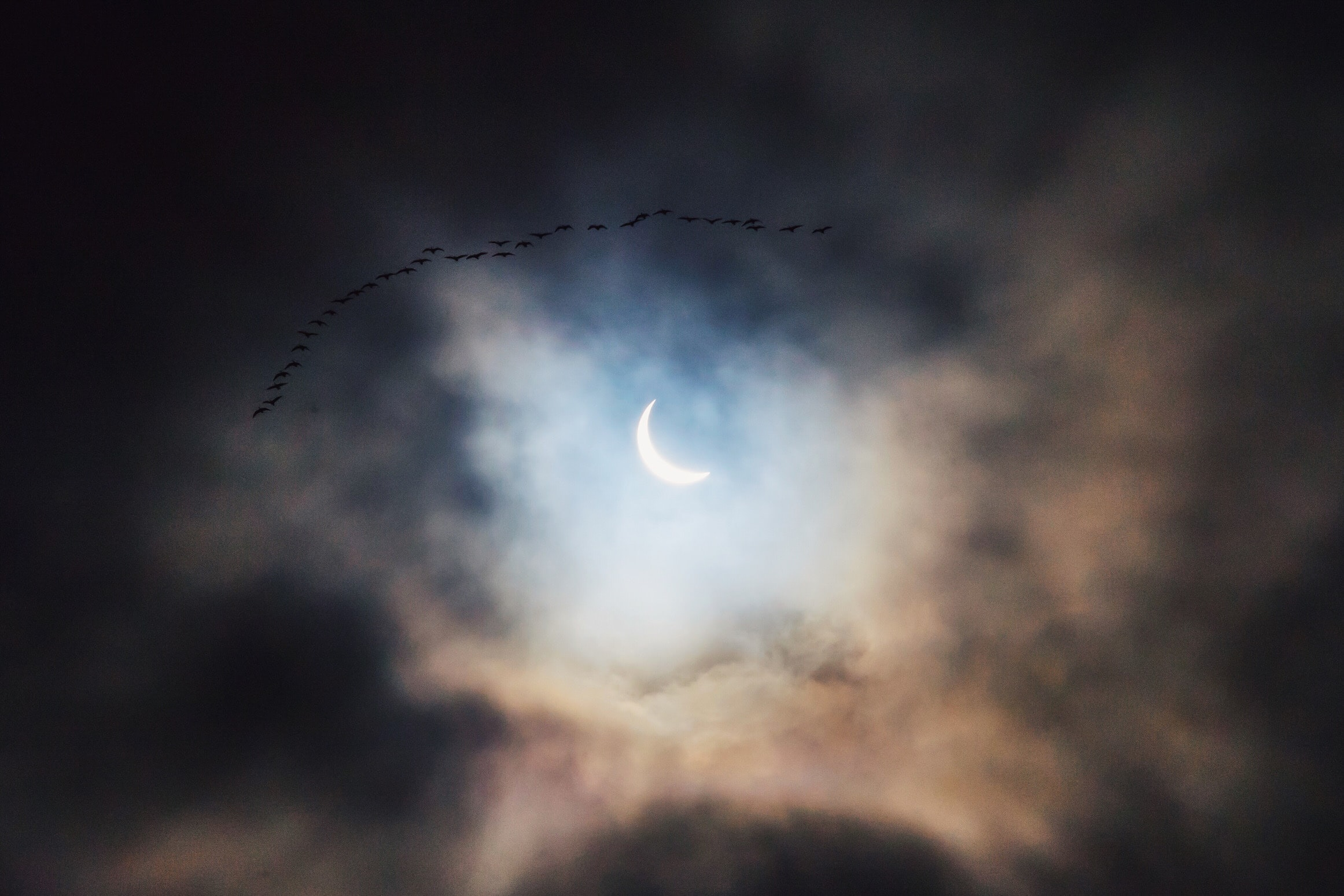 Birds flying across the night sky with a crescent moon peeking between clouds