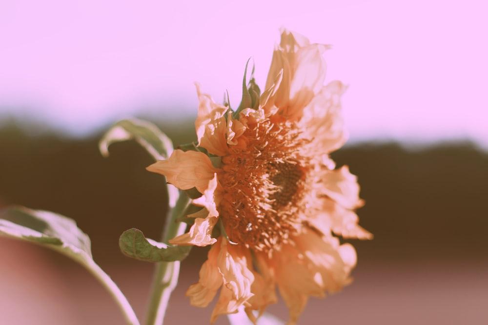 photo of brown petaled flower in bloom