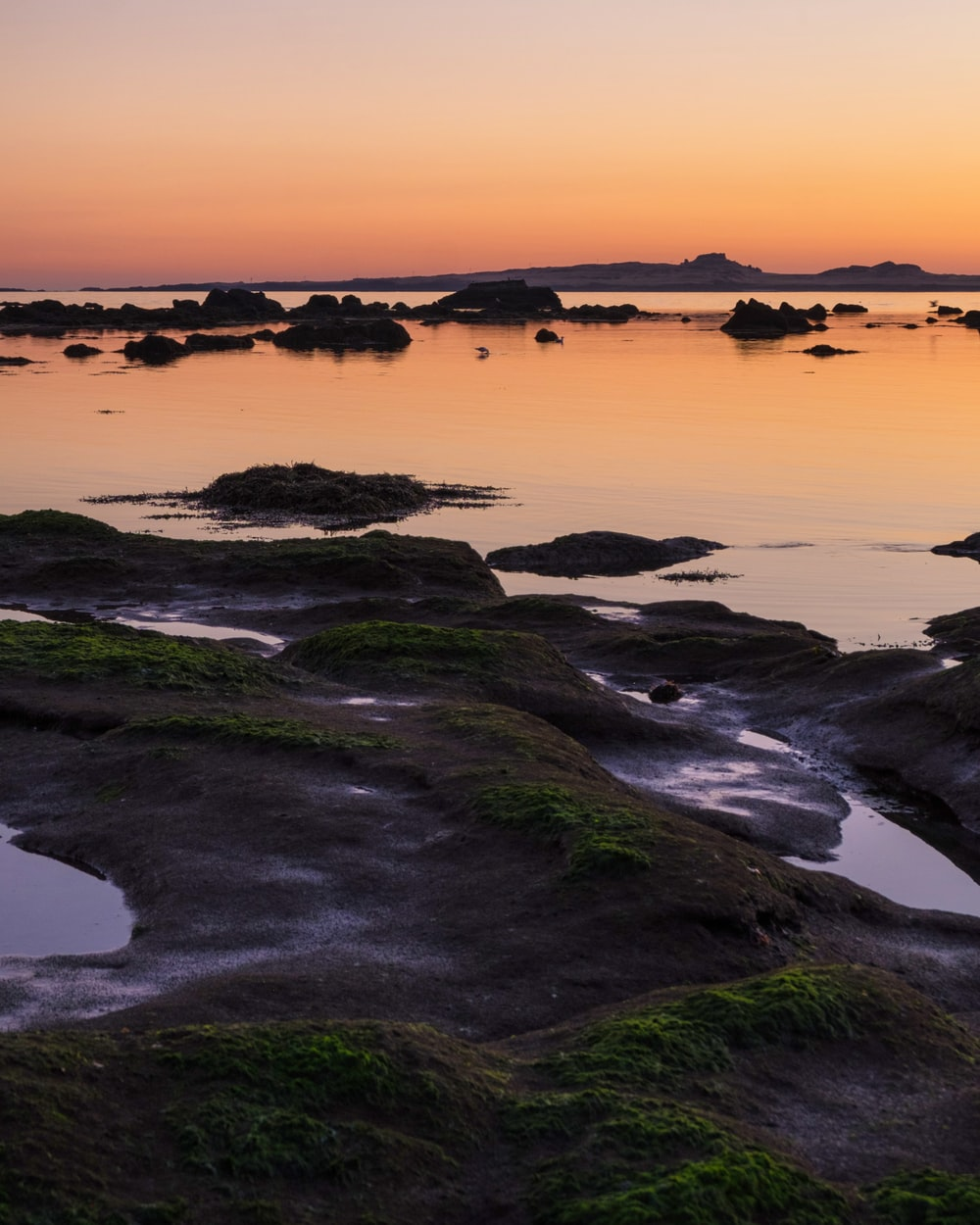 moss covered on rocks at shore during golden hour