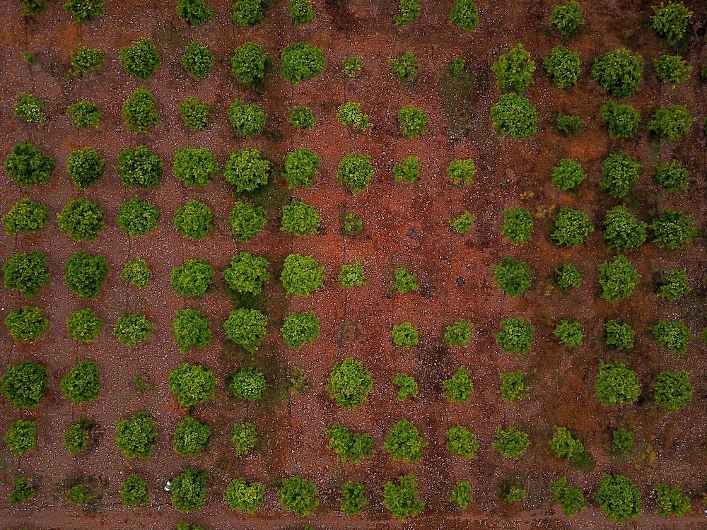 aligned vegetable plats