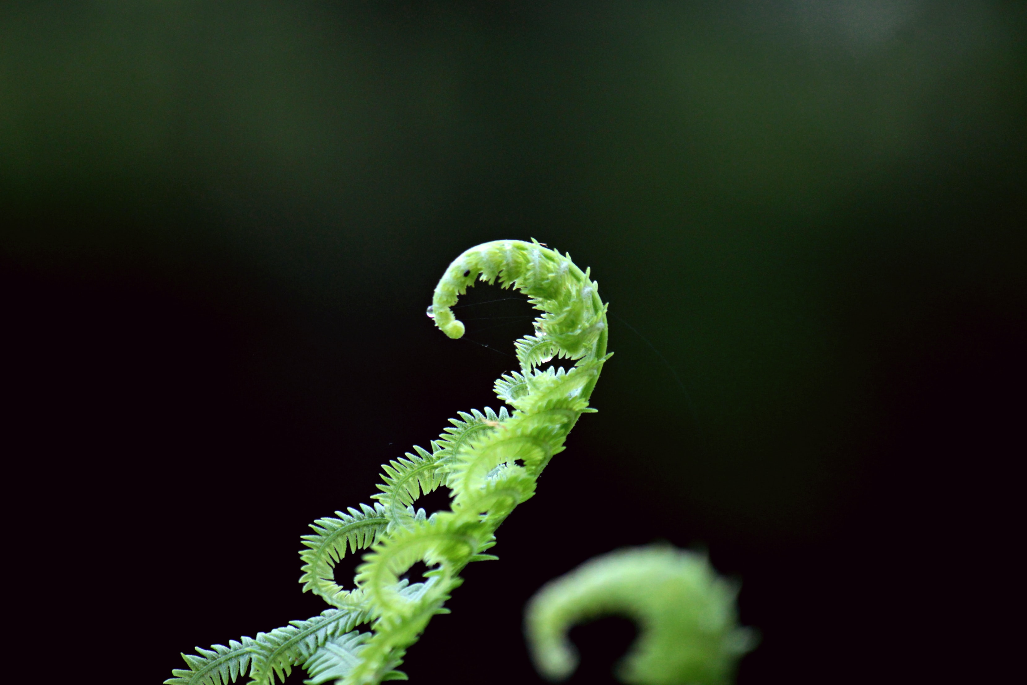 green fern plant in selective focus photograhpy