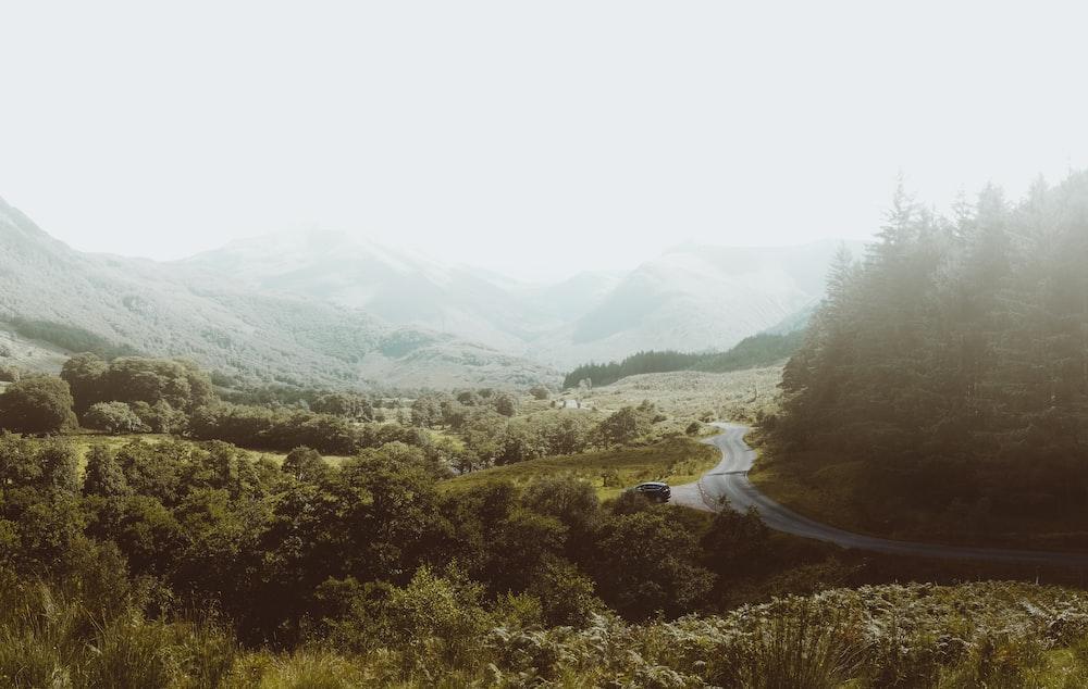 highway between forest