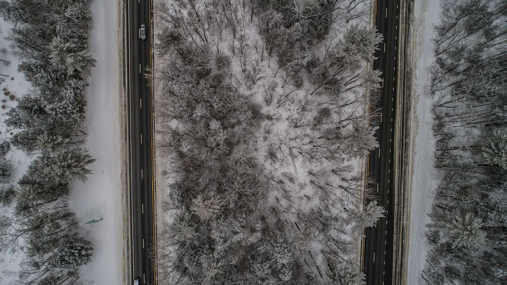 aerial photo of trees covered in snow
