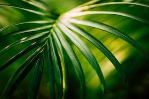 1600. Növények világa