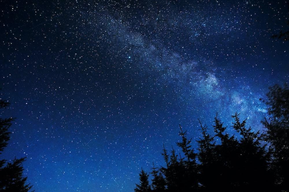 silhouette of trees under night stars