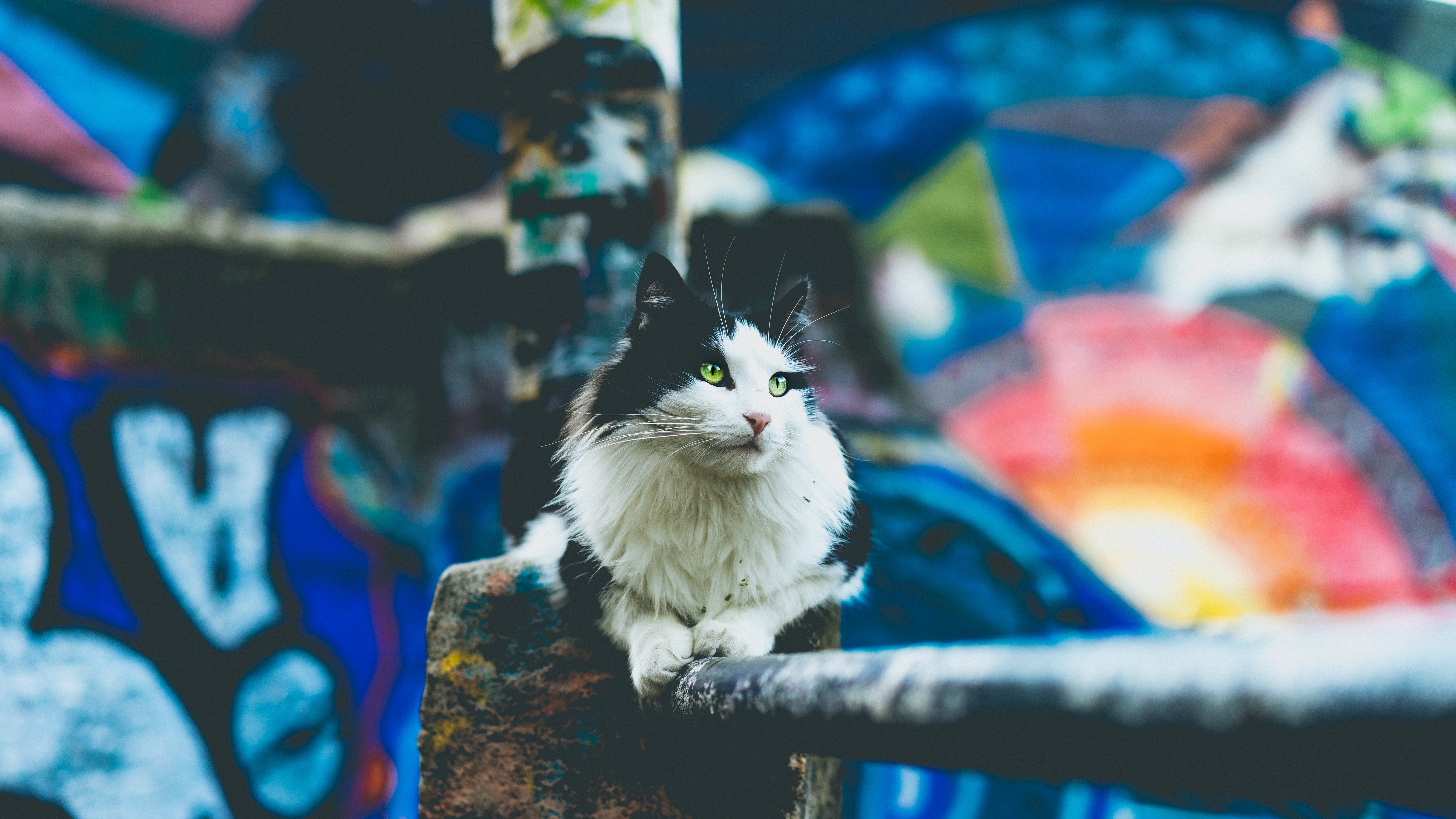 Black and white cat sitting on handrail with colorful graffiti street art mural in background