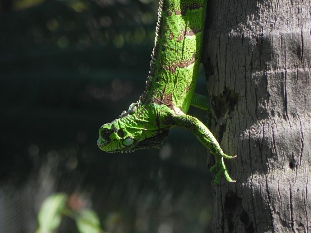 green reptile on tree trunk
