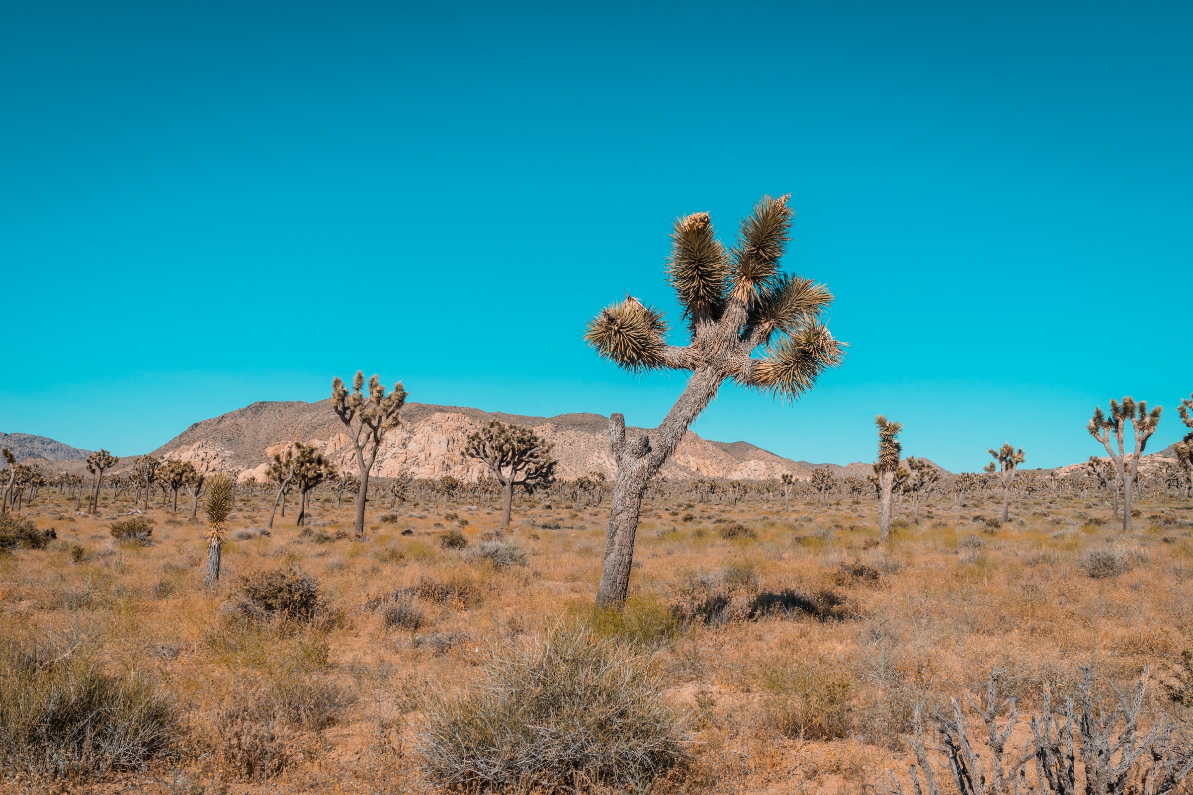 Hot summer day in the desolate desert of Joshua Tree