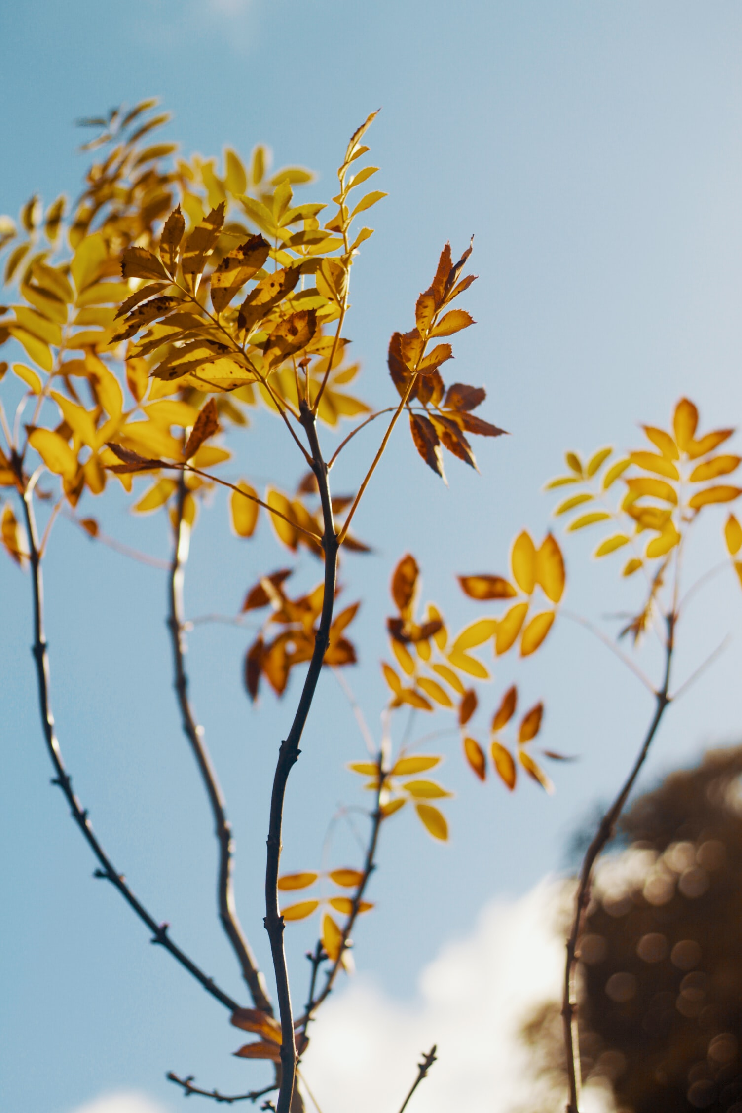 shallow focus photography of orange leaves