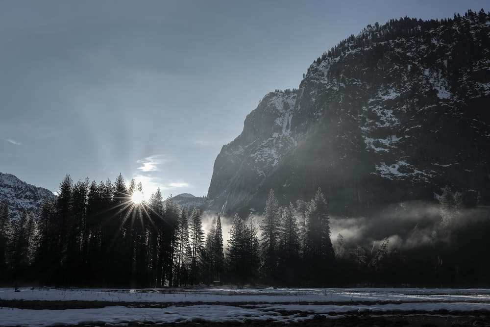sun rays through pine trees