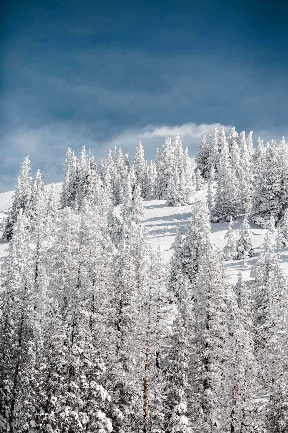 snow covered pine trees on mountain