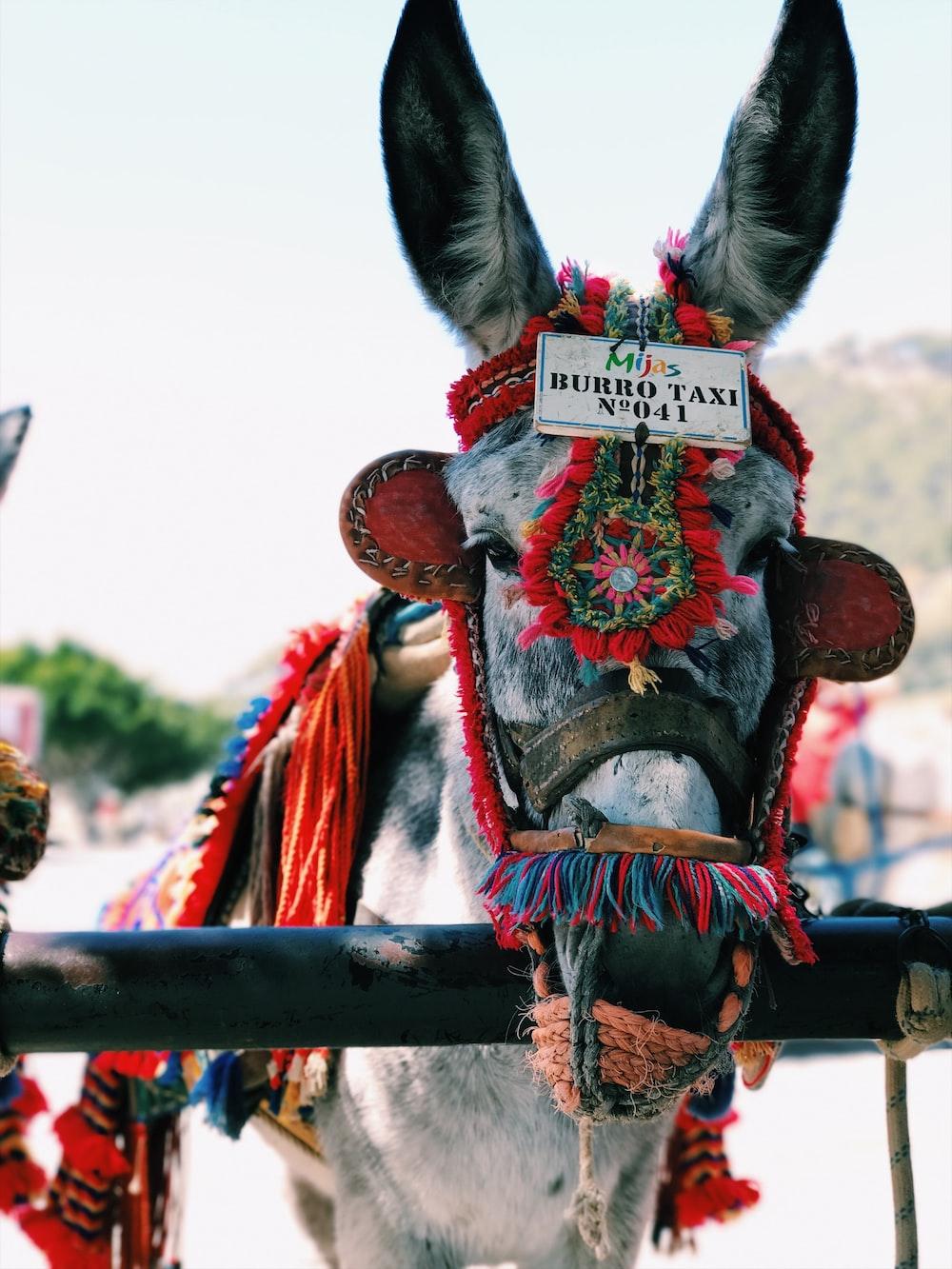 white and black donkey near black bar