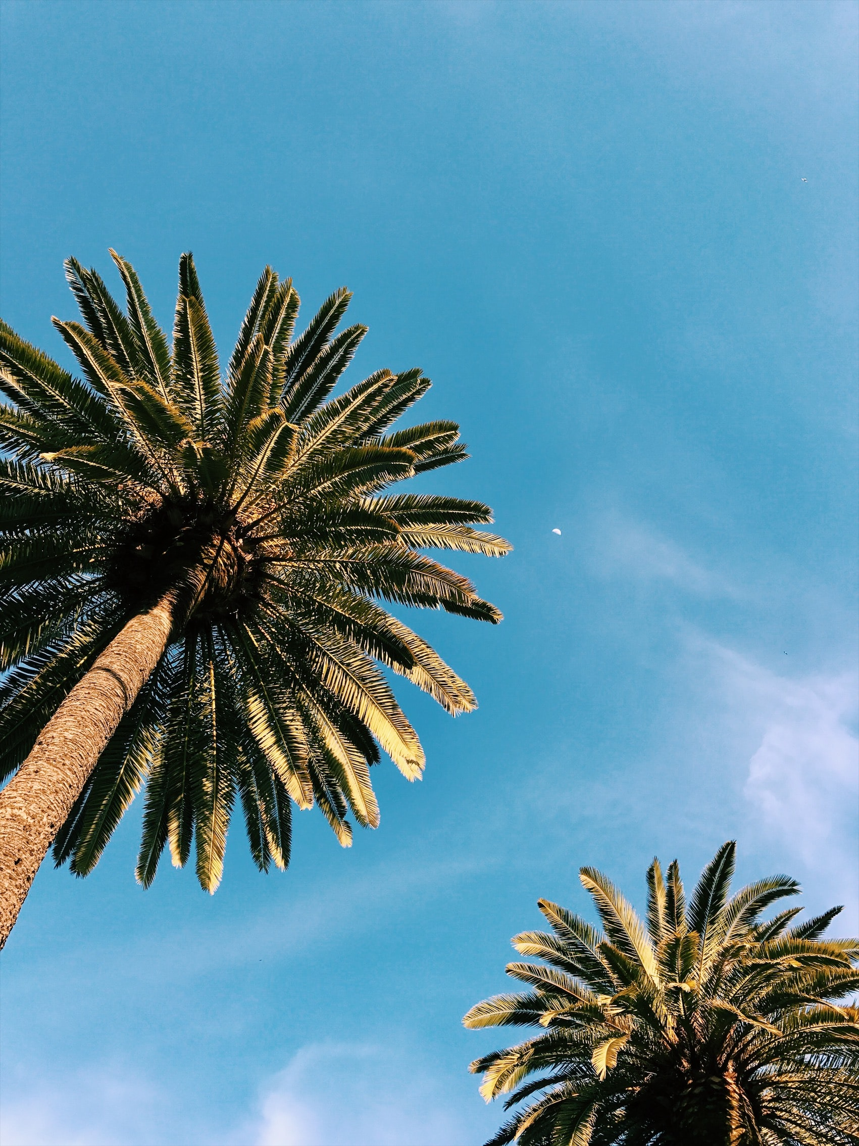 twp palm trees under blue sky at daytime