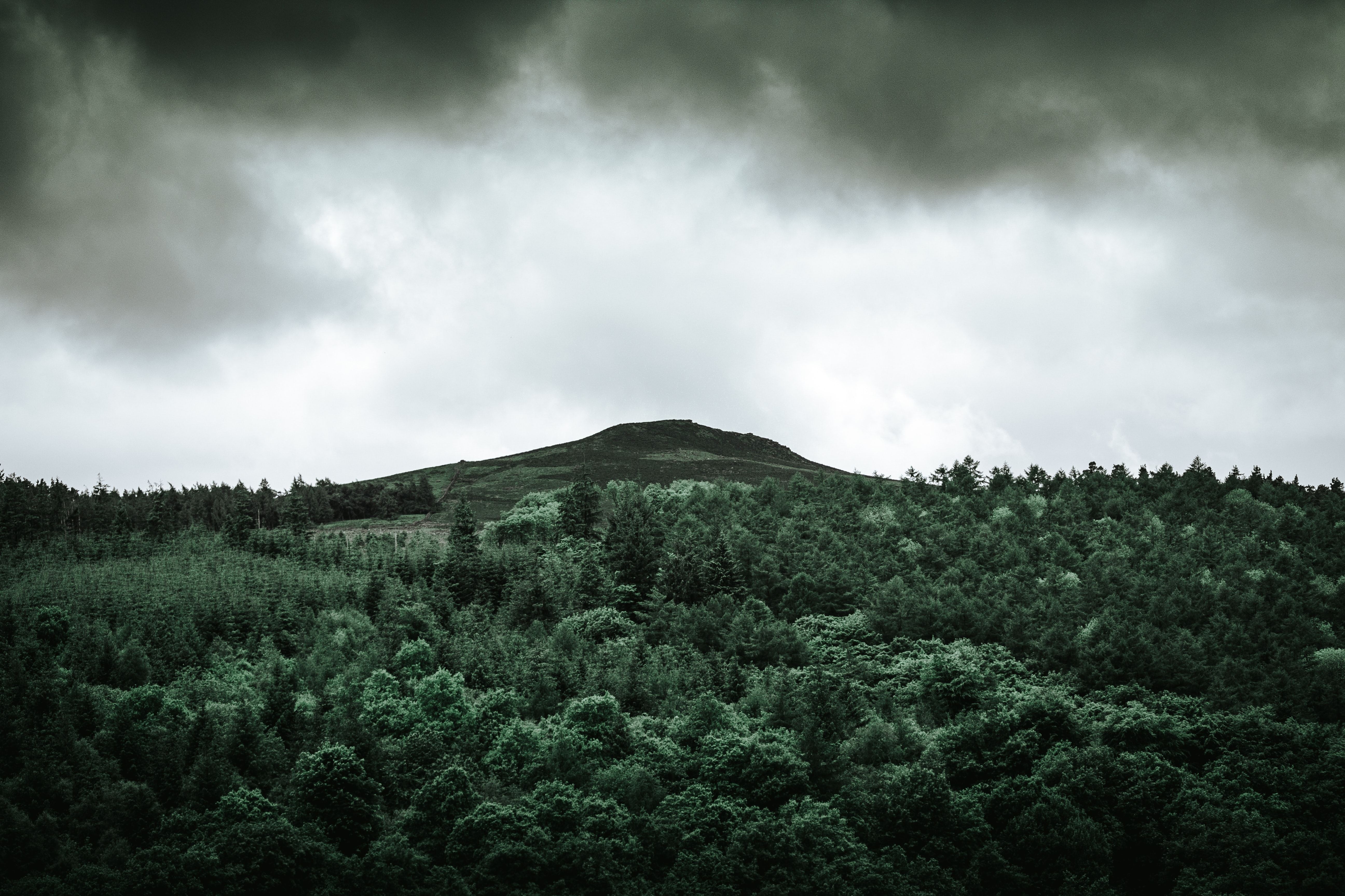 A green hill rising up above a coniferous forest near Ladybower Reservoir