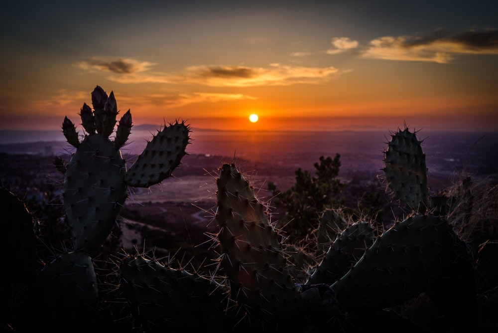 cactis during daytime