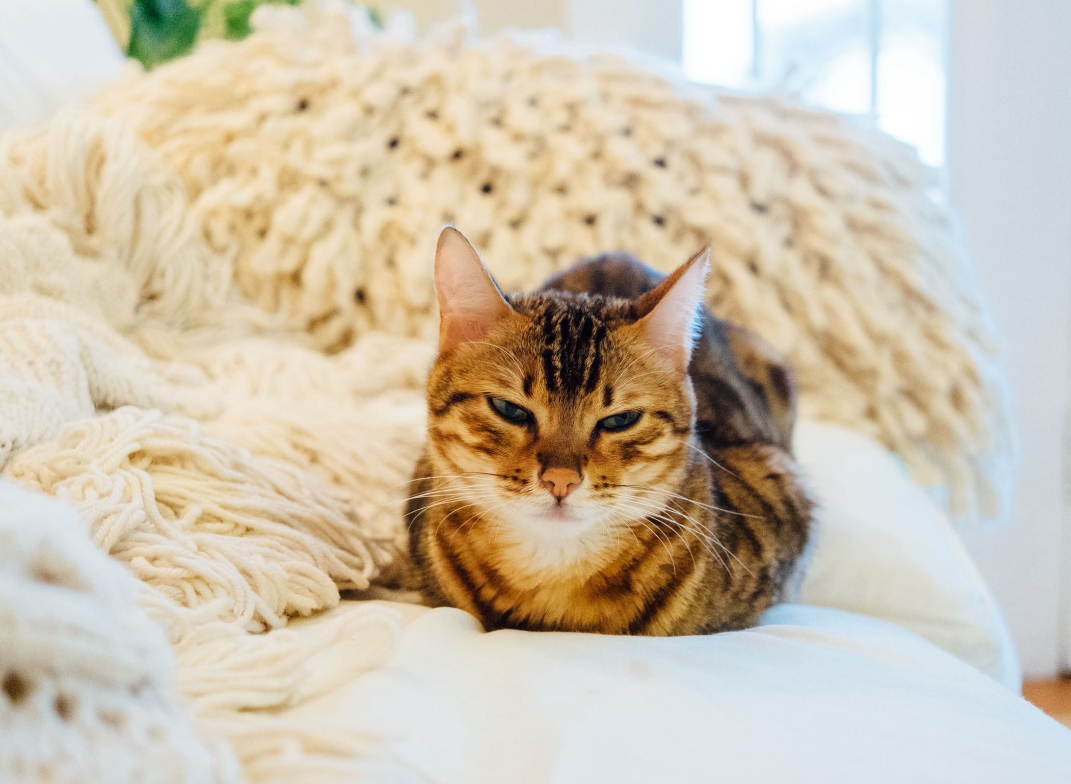 Dubious Cat