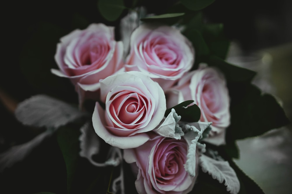 close-up photography of pink rose flowers bouquet