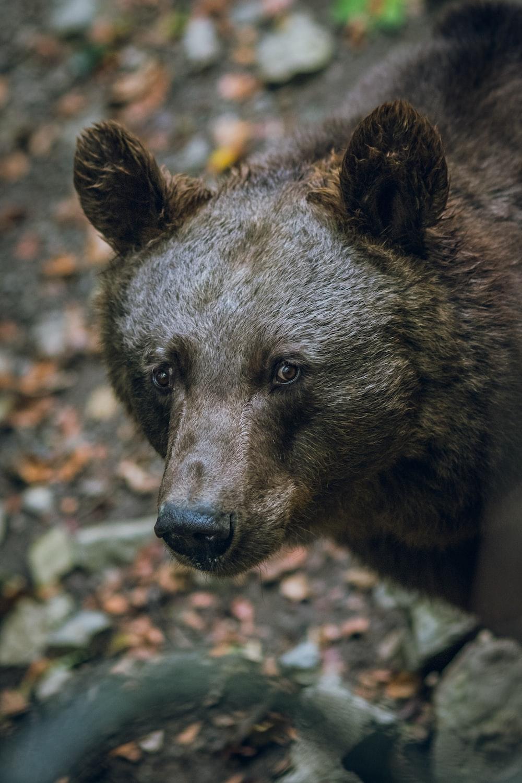 selective focus photography of a black bear