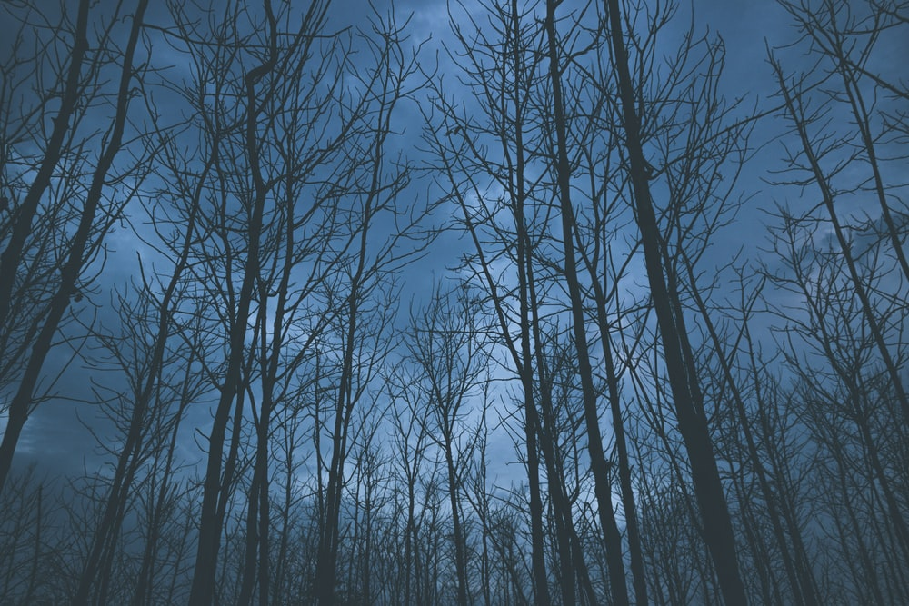 photo of bare trees during nighttime