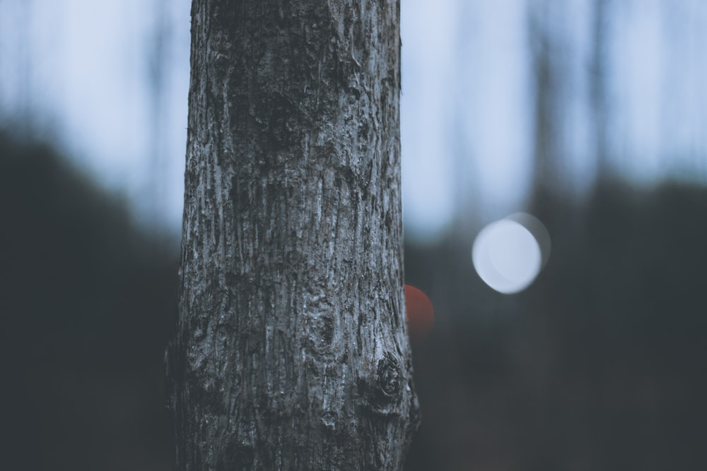 shallow focus photography of tree body