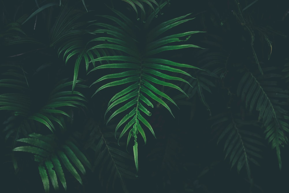 green leafed plant in black background