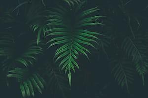 1607. Növények világa
