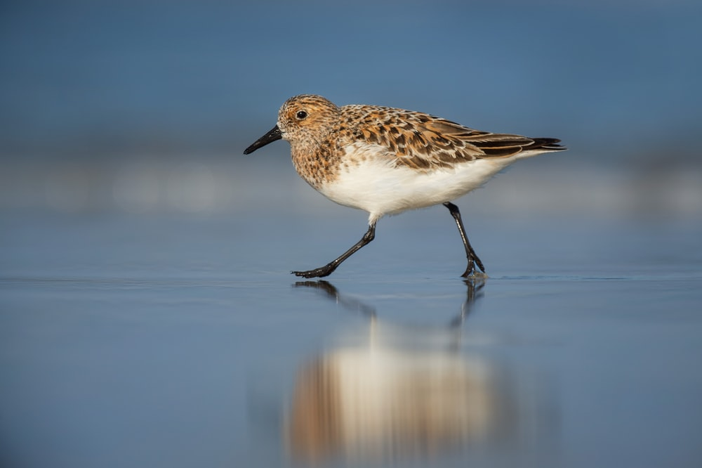 selective focus photography of brown bird walking on shore