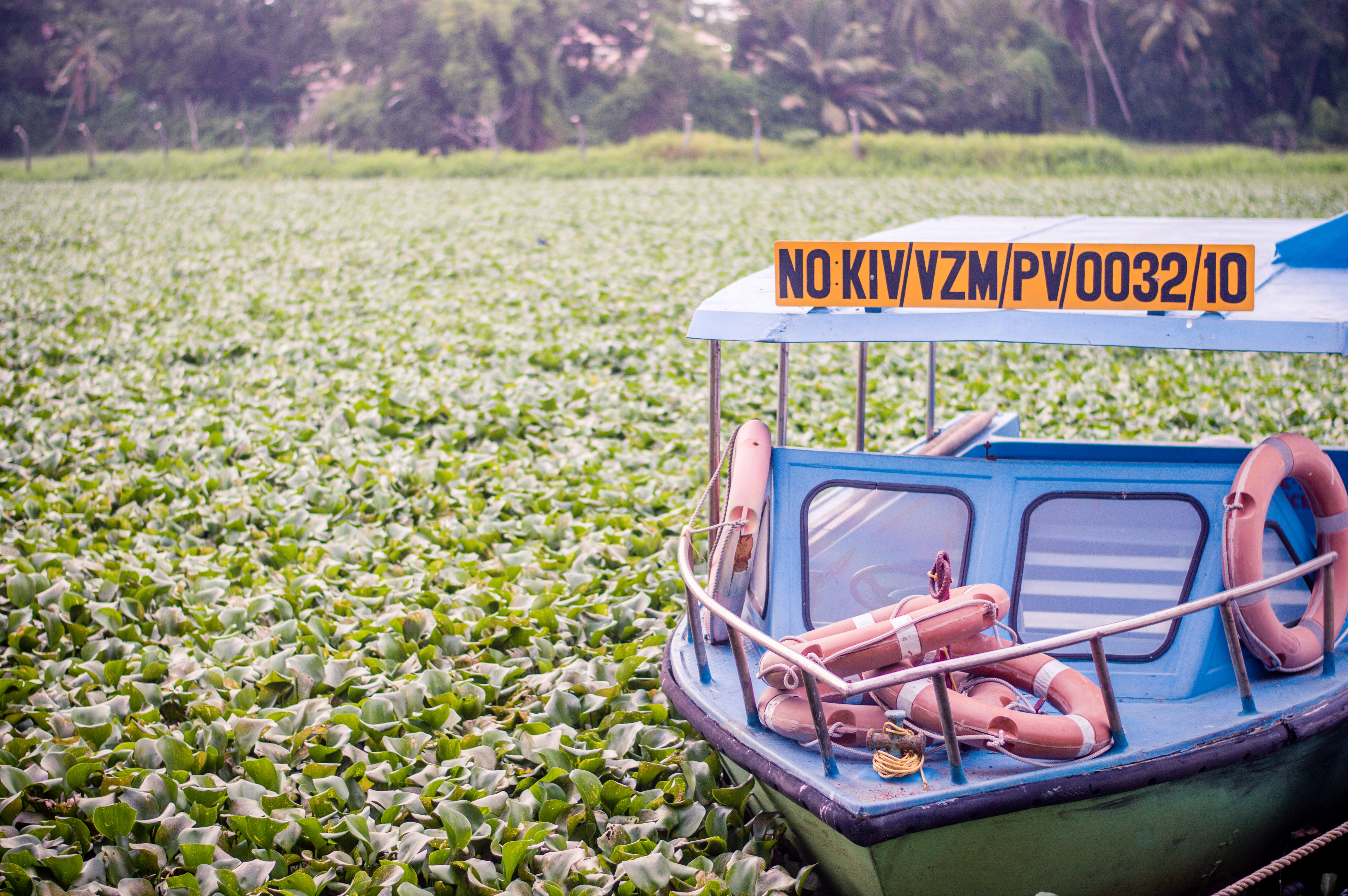 Tour boat with lifesavers in a bog covered in green water plants