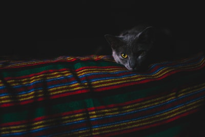 cat lying on cloth blanket teams background
