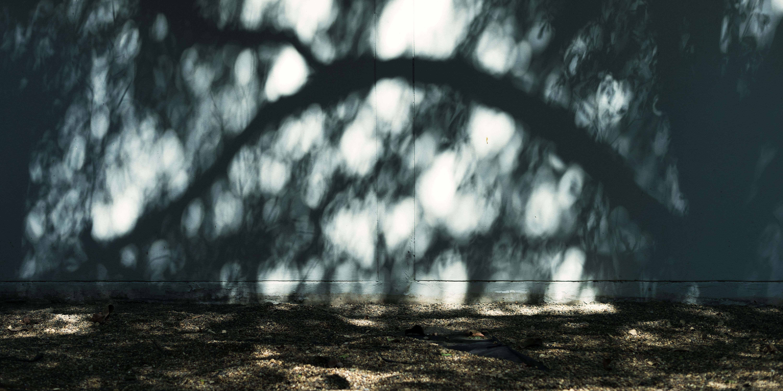 shadow leafed tree on wall