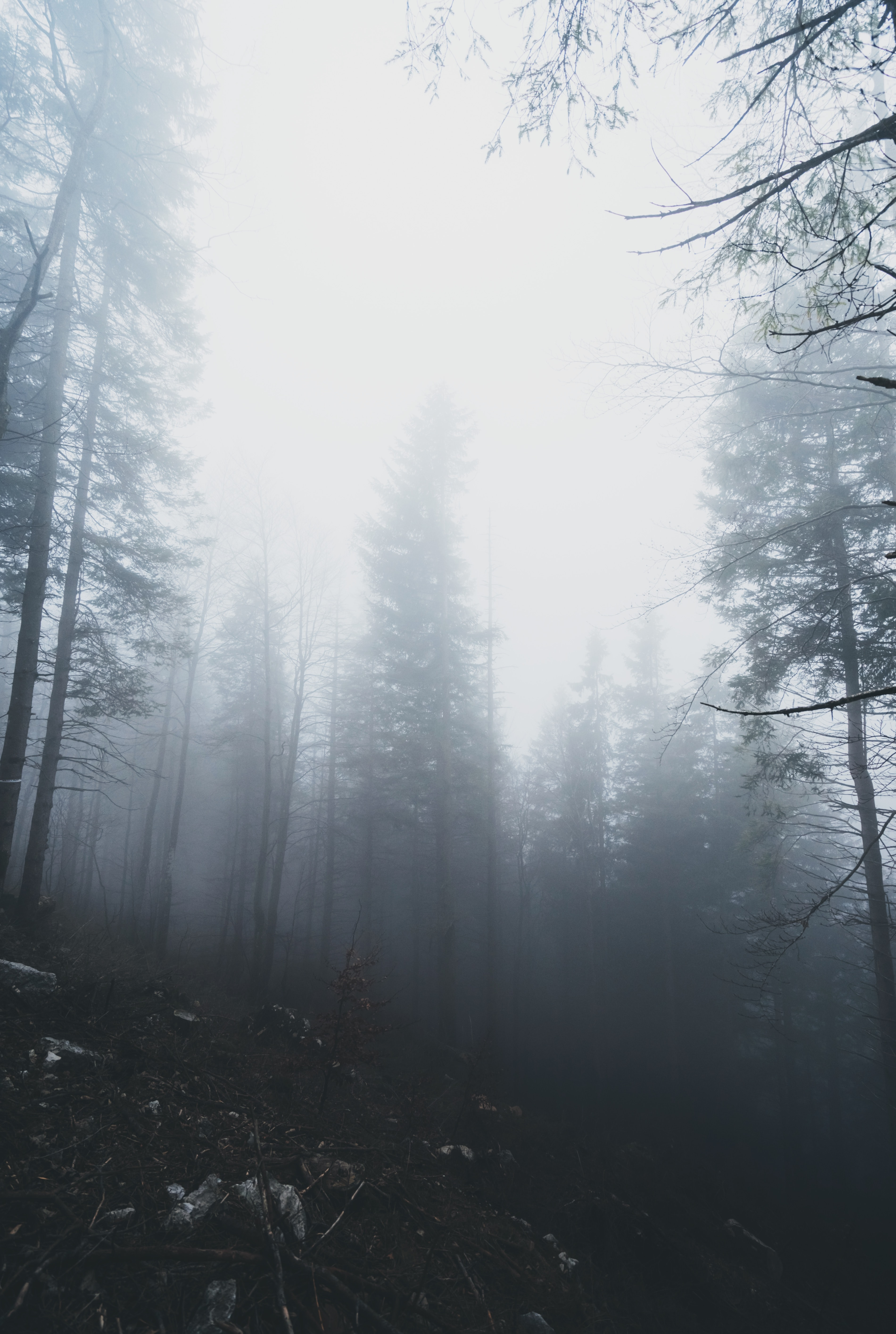 forest trees with smoke fog