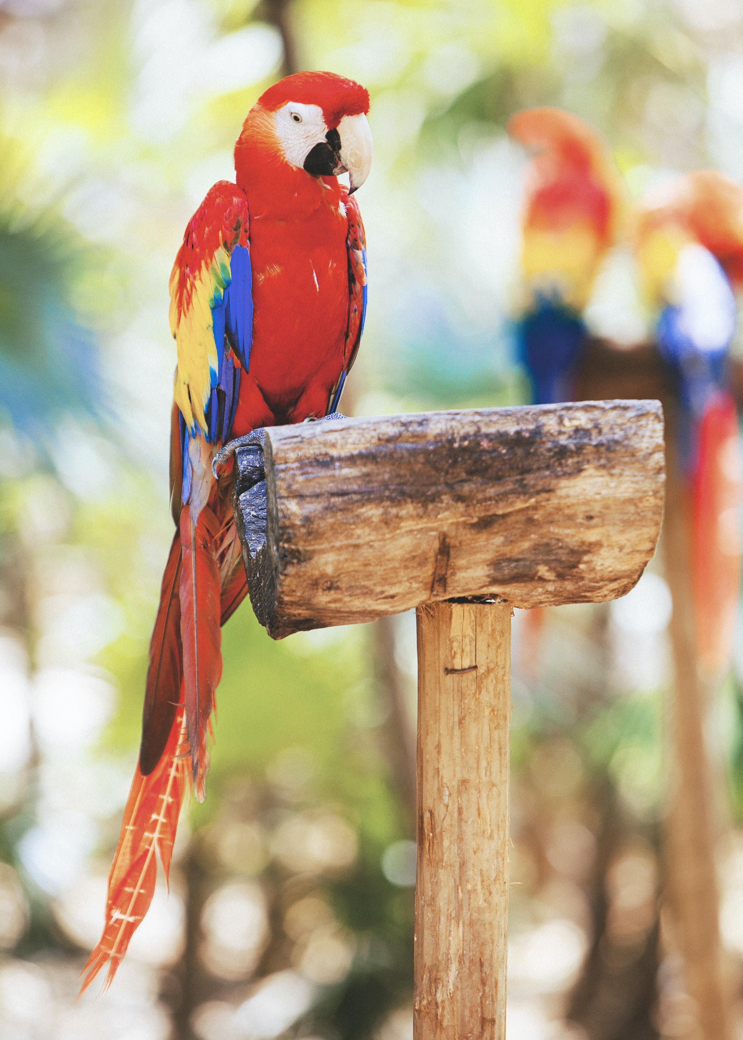 Parrots poetry stories