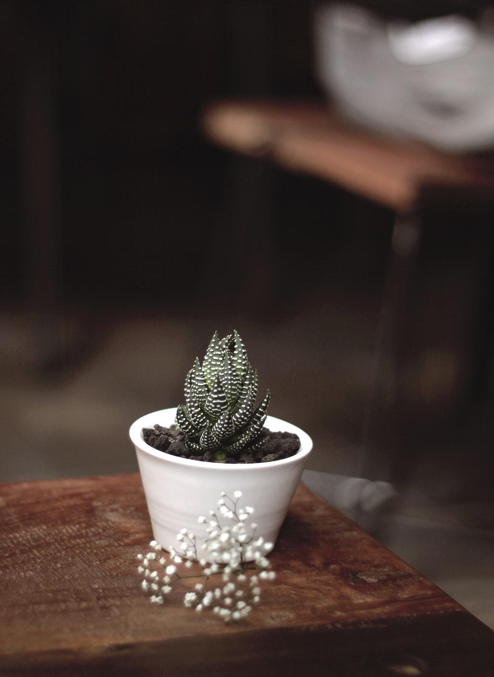 green snake plant on white vase