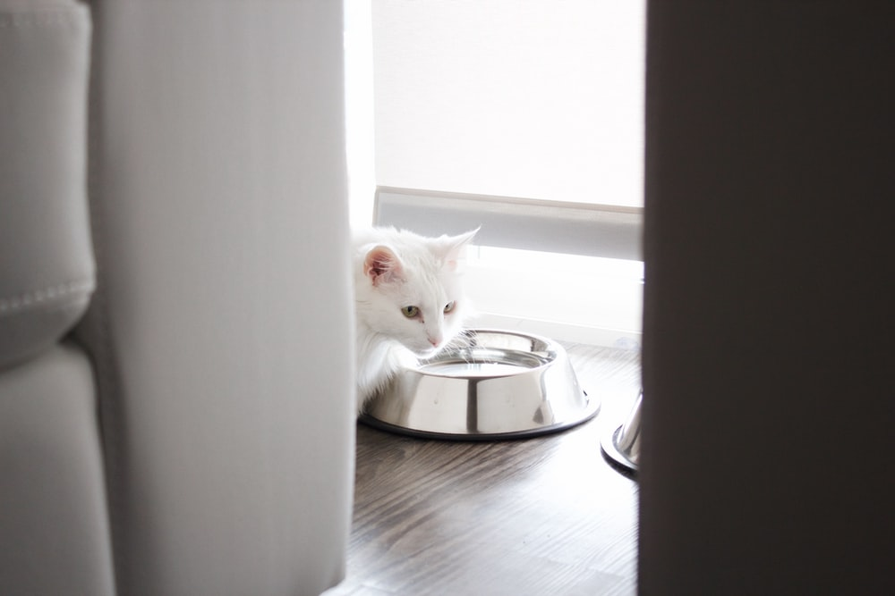 white cat on stainless steel pet bowl