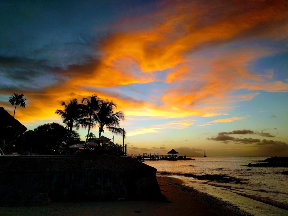 palm tree silhouette near seashore