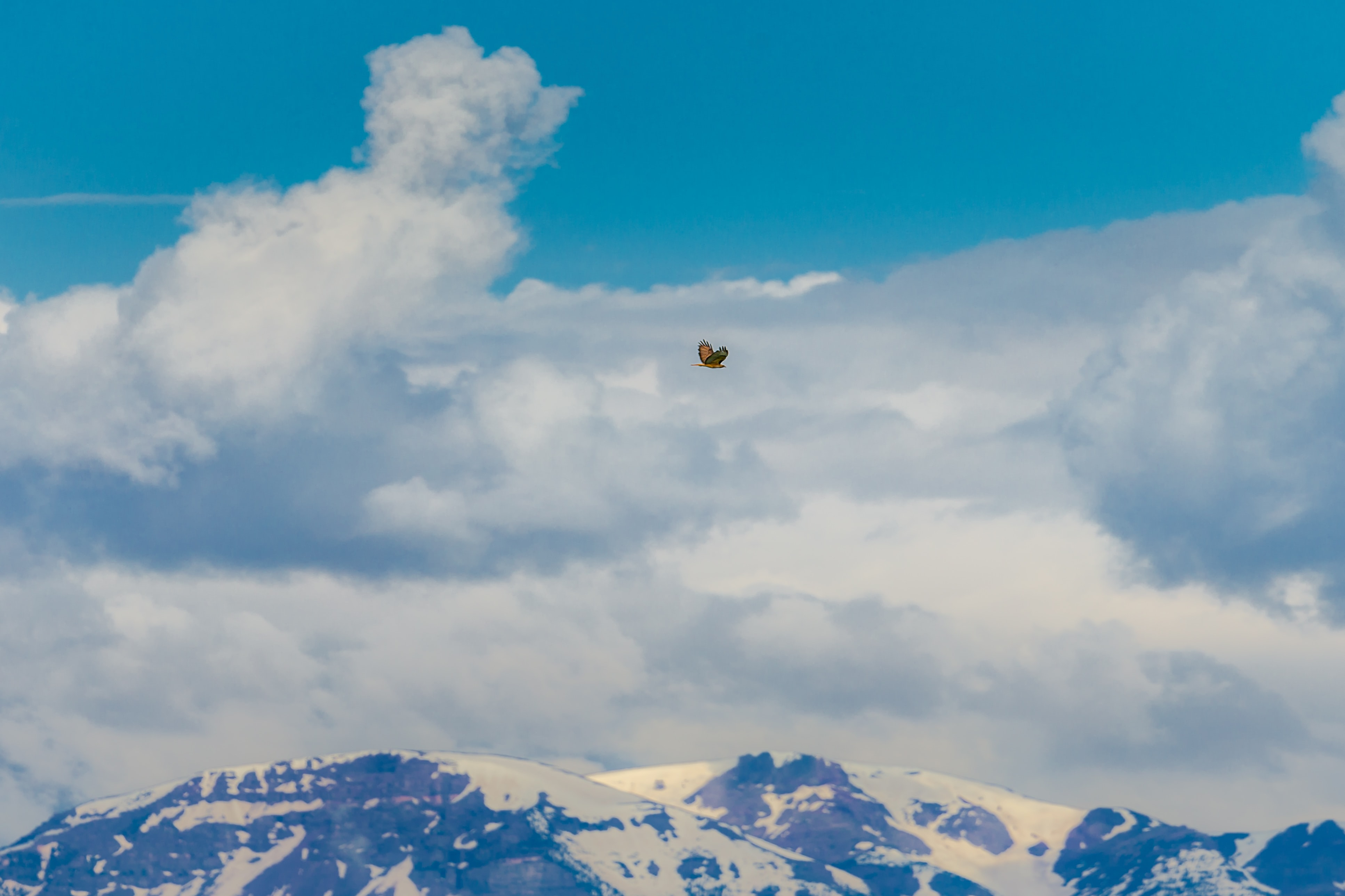 brown and black bird flying over snow-covered mountains under cloudy sky