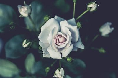 3979. Virágok